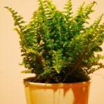 plant interieur