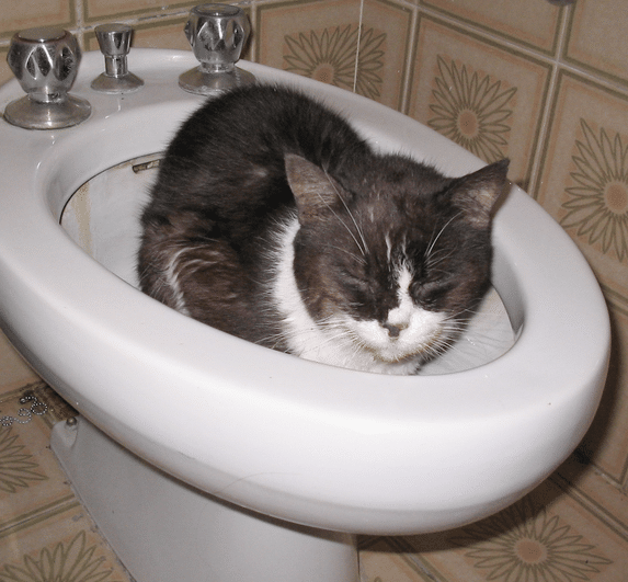 kat in bidet