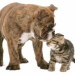 huisdieren kat en hond