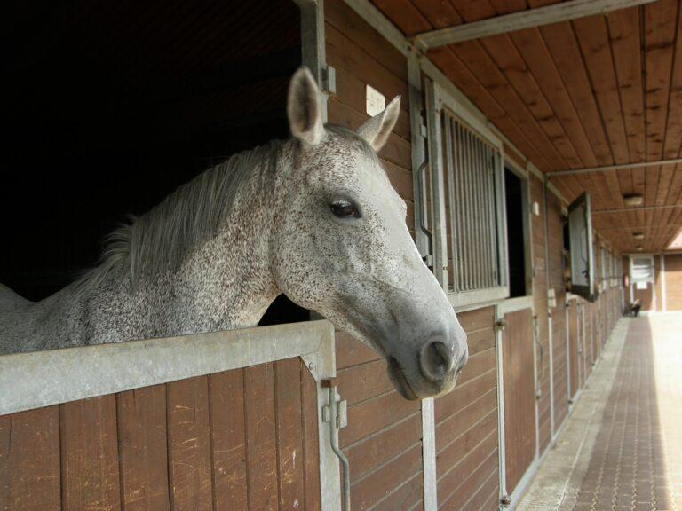 paardenstal